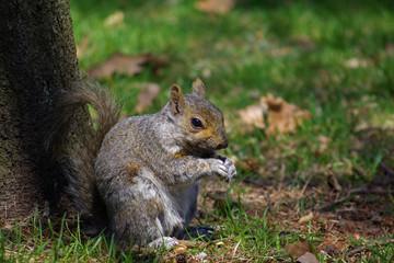 Écureuil appuyé contre un arbre