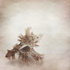 Vintage background with sea ​​shell