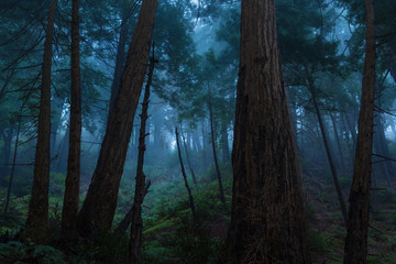 Big Sur Redwood Forest