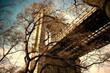 Brooklyn Bridge Through Winter Tree Branches