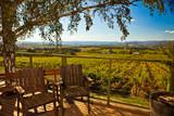 Obraz na płótnie Widok na pola winogron