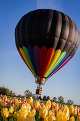 hot air balloon ride over the tulips