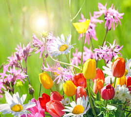 Frühlingserwachen: Bunte Blumengrüße :)