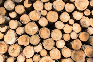 Holztextur Hintergrund