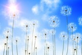 Digitally generated dandelions against blue sky - 64745844