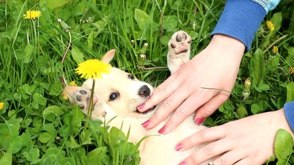 funny puppy playing with human hands