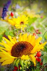 Spätsommer Sonnenblumen