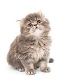 little fluffy kitten - 64748087