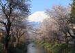春色の富士山