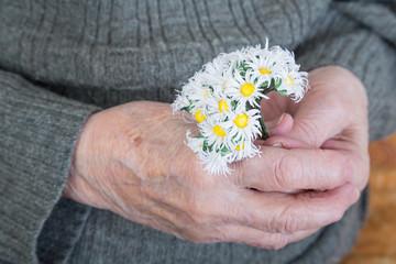 holding daisy