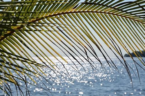 Feuille de cocotier à Bali - 64752201