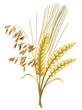 Leinwandbild Motiv Getreide - Hafer, Gerste, Weizen