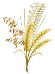 Getreide - Hafer, Gerste, Weizen