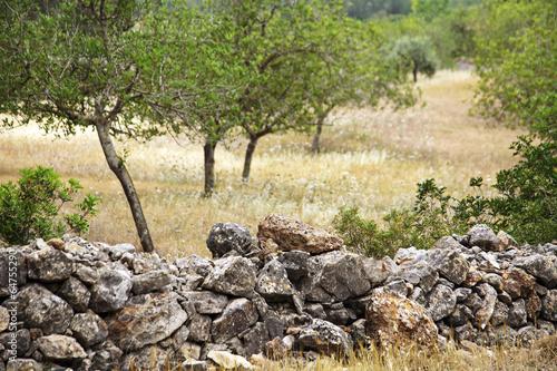 Ibiza, Landschaft - 64755290