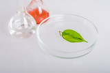 Labware dishes for biochemical experiment. poster