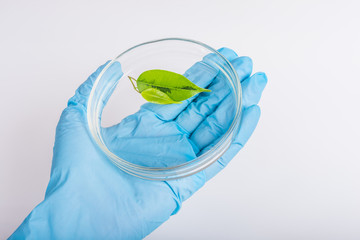 scientist holding a petri dish with plant