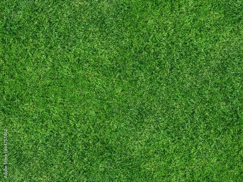 Leinwanddruck Bild Rasenfläche