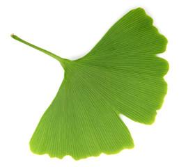 ginkgo biloba leaves isolated on white background