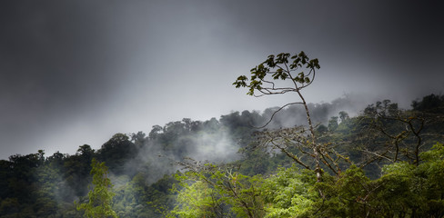 Trees in a forest, Costa Rica