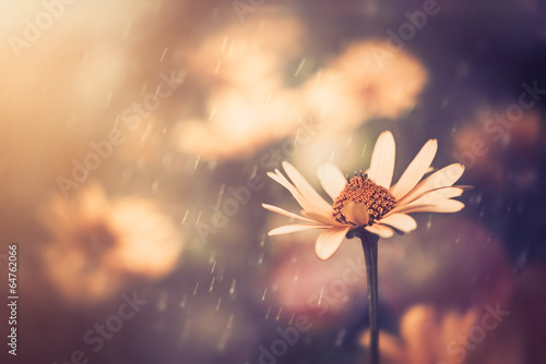 Foto op Aluminium Bloemen yellow summer flower under sunset light