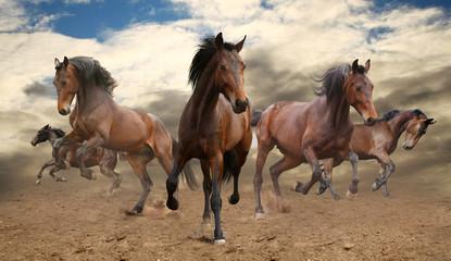 pięć niepokornych Zatoka galopujący koń