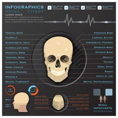 Skull Human Head Medical Infographic Infochart