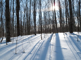 Trees in a snow covered landscape, Orangeville, Dufferin County,