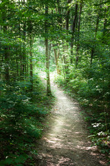 Trail passing through a forest, Tobermory, Ontario, Canada
