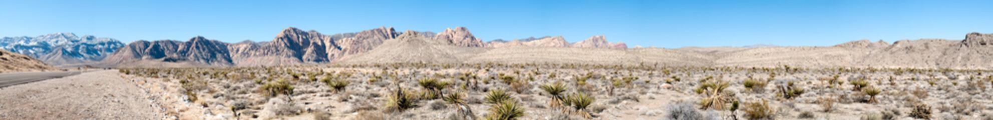 Cactus in desert, Death Valley National Park, California, USA