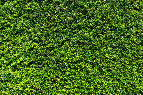 Aluminium Textures Green leaves wall background