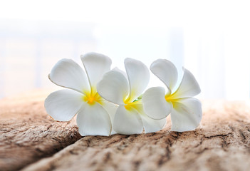white plumeria flowers on rustic wood