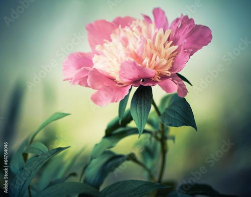 summer flower closeup - 64764046