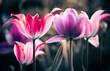 fresh spring garden flowers