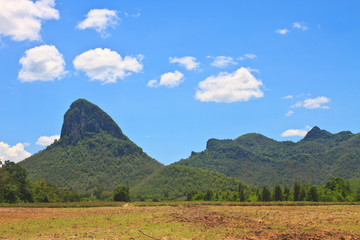 sugar cane field near a mountain and blue sky