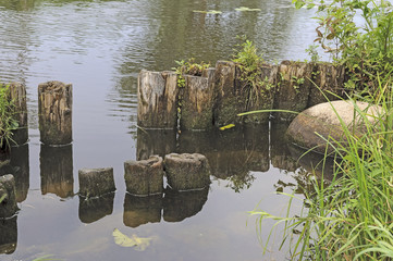 Old wooden piles near the riverbank