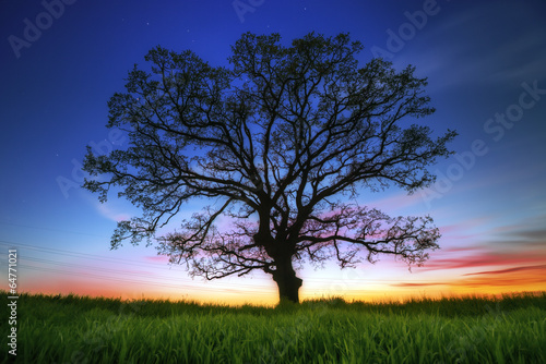 Big tree silhouette, sunset shot - 64771021