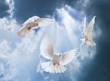 Białe gołębie nad niebem - 64771229