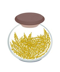 A Jar of Cereal Plant of Golden Rice