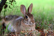 Cute cottontail bunny rabbit under tree in the garden