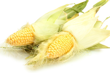 fresh corn isolated on white