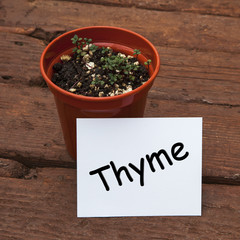 Thyme seedlings in plant pot, with herb name on card.