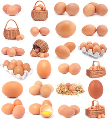 Eggs collection