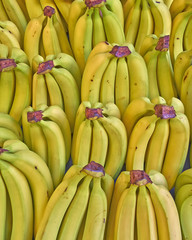 fresh bananas for sale, natural background