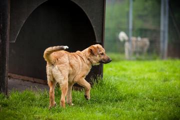 Hund im Freilauf