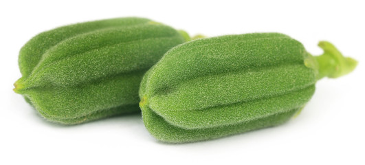 Green sesame pods