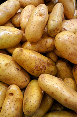 Lots of potatoes in supermarket