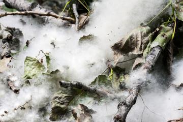 Pollen in the undergrowth