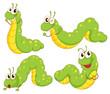 Four green caterpillars - 64789403