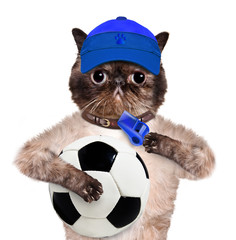 Cat with a white soccer ball.