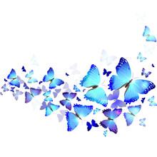 fond de papillons bleus